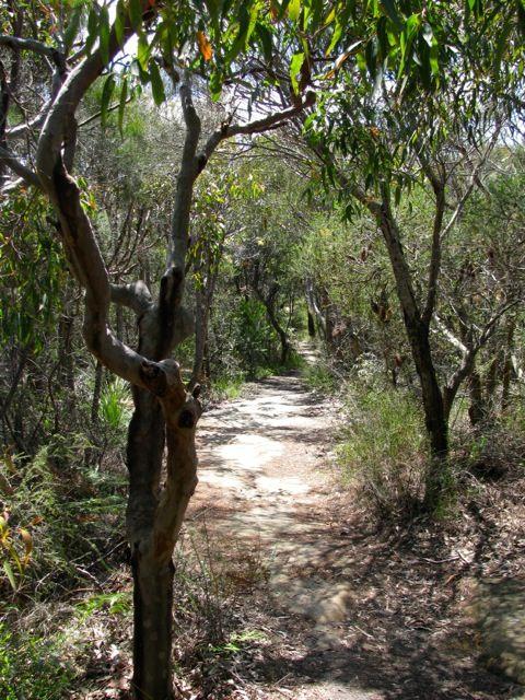 """#australia #sydney """"Sydney – von versteckten Buchten und lachenden Vögeln"""" lies mehr über den Manly Scenic Walkway auf www.goodmorningworld.de"""