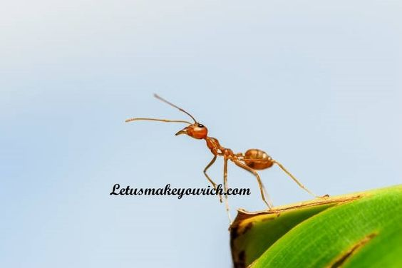 All good work is done the way ants do things: Little by little. ― Lafcadio Hearn