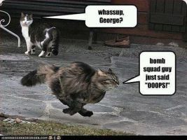 omg that cat is out of there