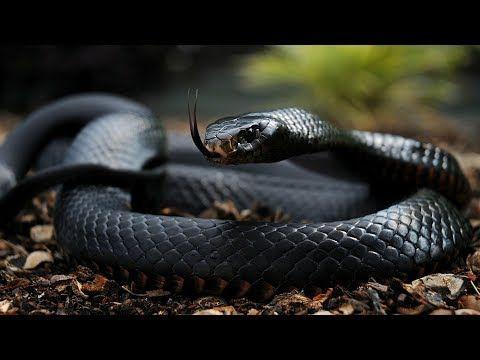 10 Cobras Mais Venenosas Do Brasil Youtube Imagens De Cobras