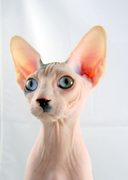 Look how cute! I will call him Pepe because he looks french :) hehe