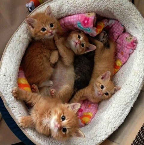 Who Turned Out The Lights Kittens Cutest Cute Cats Cute Animals