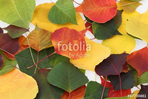 「紅葉 落ち葉」の画像検索結果