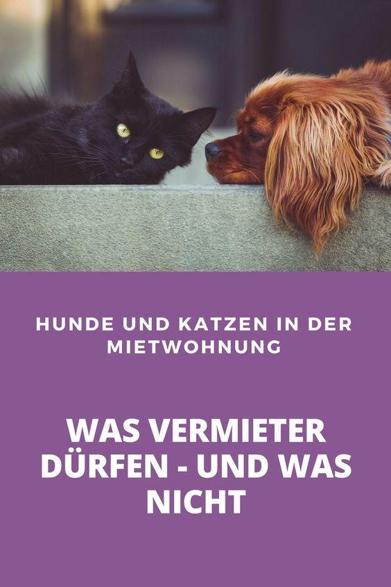 Prazedenzfall In Koln Vermieter Durfen Hunde Und Katzen Nicht