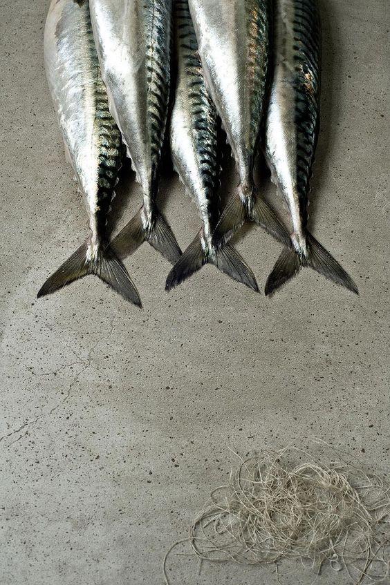 Fish1-NikoleRamsayPhotographer-KaraRosenlundStylist