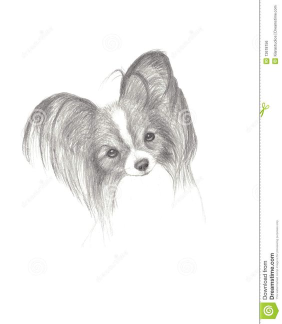 papillon dogs to color - Google Search
