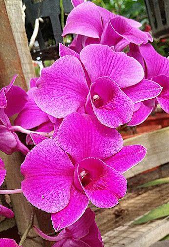 ORQUIDEAS * ROSAS * OUTRAS FLORES - Comunidade - Google+