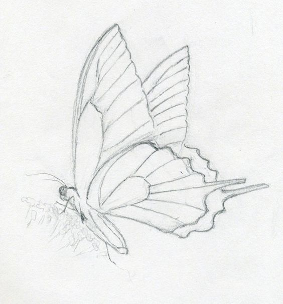 butterflies drawings   Make Butterfly Sketch Quickly And Easily. Speed Is The Key