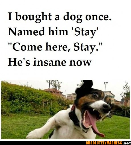 Come here Stay!
