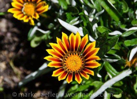 Aus meinem Garten: Der 18. Mai
