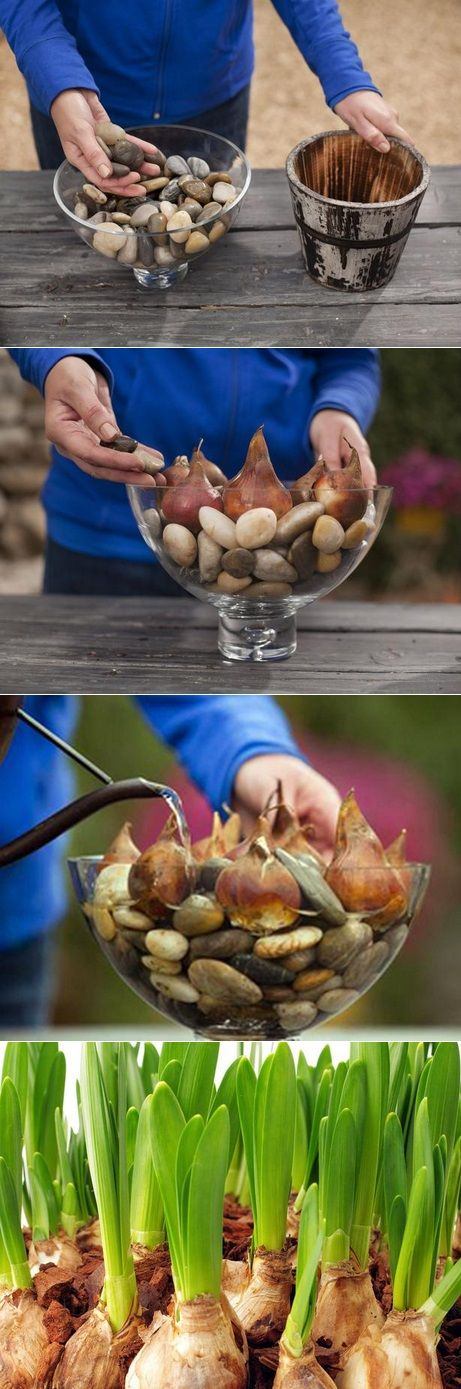 For this project you'll simply plop a few bulbs into a container and add water. Let your kids help choose the perfect colors and decorate the pot to give as a holiday gift to a favorite teacher. They'll love watching the sprouts emerge. You will need : bulbs (used here: amaryllis, Paperwhite, pre-chilled daffodils) containers,…