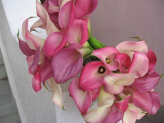 Pink Calla Lilies. Bridesmaid.