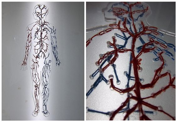 Blood System - perspex, laser cutting, linen thread.