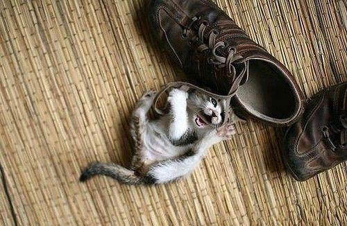 Little baby cat!!