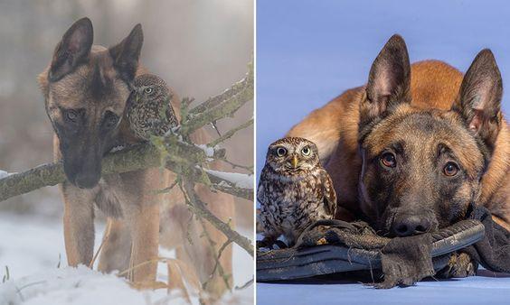 Série de fotos encantadora registra a amizade entre um cão e uma coruja