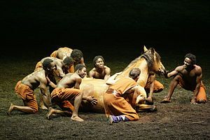 CAVALIA-The stars of the show are the horses, about half stallions and half geldings. (There are no mares). These horses eat 40 bales of hay per day; they consume 900 kg (1980 lb) of grain and 20 kg (44 lb) of carrots each week. Many of the horses have their manes braided when not performing, and Templado's knee-length mane takes 90 minutes to complete. The horses are maintained by a team of 20 people, including a stables manager, two veterinary technicians, a farrier, and several groomers.