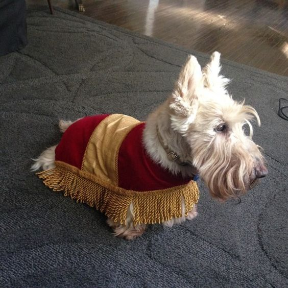 "The footstool from ""Beauty and the Beast."" 