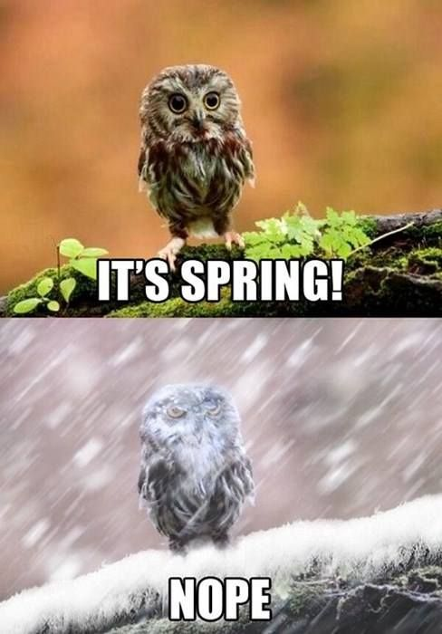 This spring...