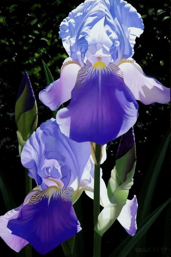 Brian Davis (b.1946) — Two Blue Irises (566x850):