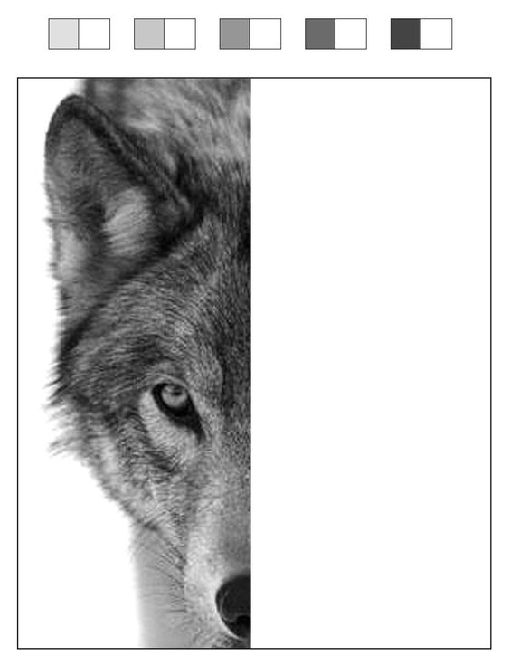 wolf drawing template