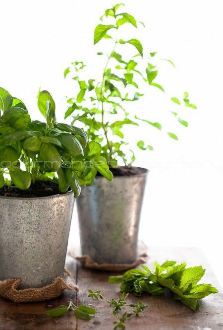 caring for an herb garden.
