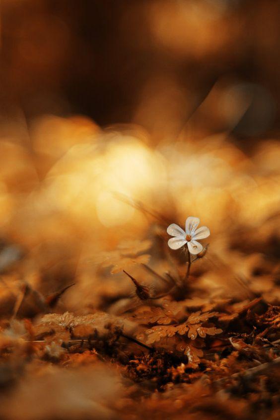 autumnal bokeh by ~ChromaticBokeh on deviantART