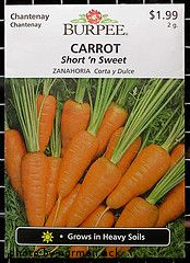 All the info on planting carrots