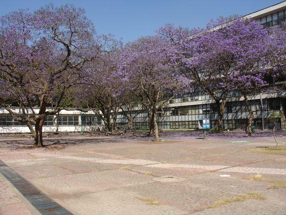 Jacarandas Facultad de Economía