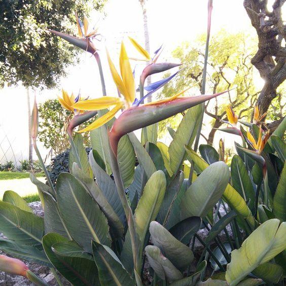 #Casino Quanto sono bello #jardin#casino#montecarlo#fleur #garden#flower by kyara_jdg from #Montecarlo #Monaco