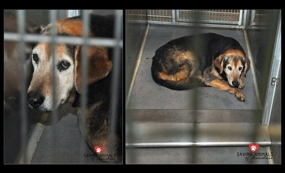 Buddy needs approved rescue from Modesto, California shelter