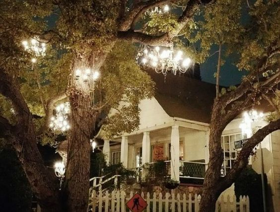 Chandelier Tree | Discover Los Angeles