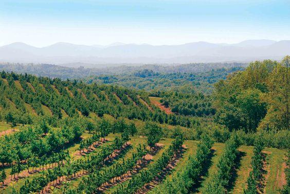 Mercier Orchards in Beautiful Blue Ridge, Georgia