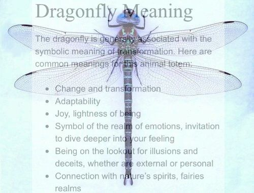 what is the meaning of fly