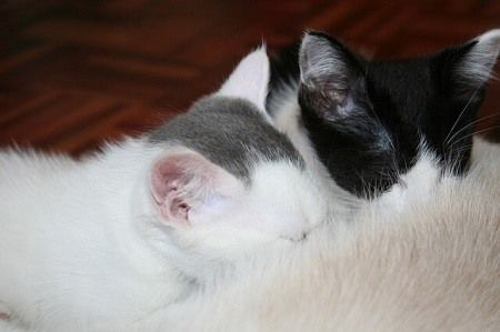 How Many Placentas Do Cats Have When They Re Born Upgrade Your Cat Cats Kitten Care Pregnant Cat
