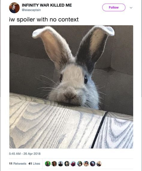 17 Devastating Avengers Infinity War Spoilers Presented With Zero Context With Images Cute Animals Pet Bunny Cute Creatures