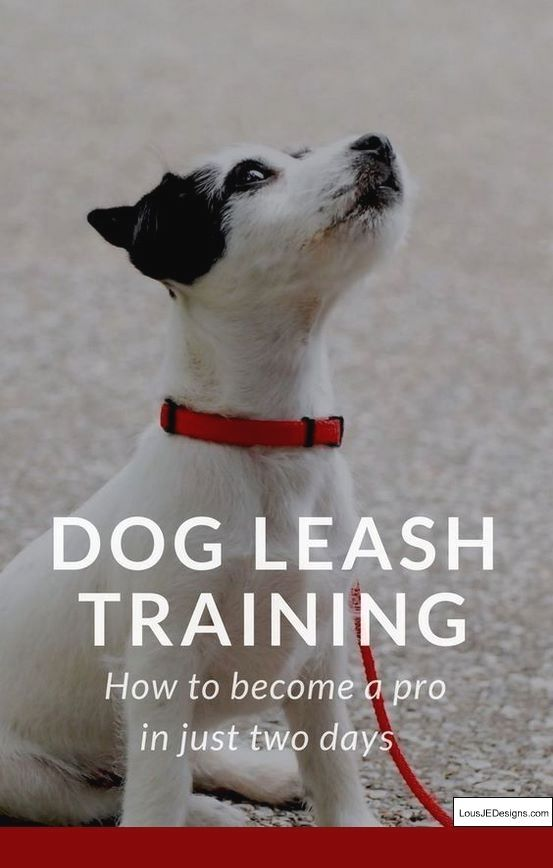 How To Train Dog Not To Bark Reddit And Pics Of How To Teach A Dog