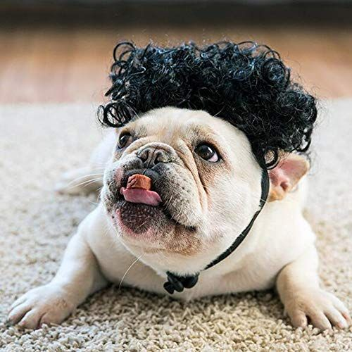 Agirlvct Funny Dog Costumes Super Cute Pet Hair Afro Curly Wigs
