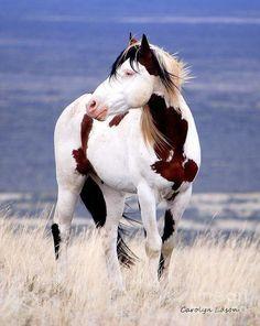 Mustang stallion Shaman - Google Search