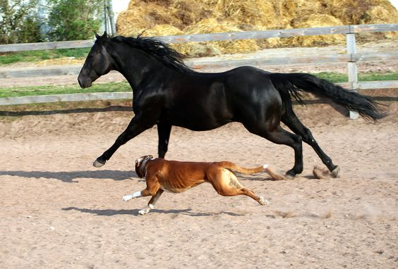 Pferd & Hund rennen