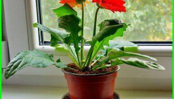 Tanaman Pembersih Udara Dalam Ruangan Rumah Dan Kantor Dunia Fauna Hewan Binatang Tumbuhan Tanaman Bunga Ide Berkebun