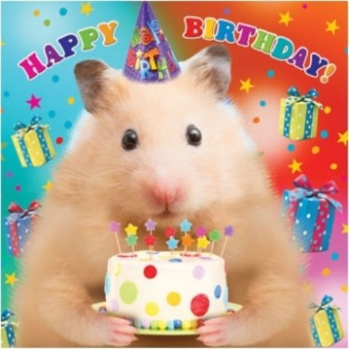 3 29 Gbp 3d Holographic Hamster Happy Birthday Card Square Greeting Cards Ebay Home Gard Happy Birthday Brother Happy Birthday Greetings Birthday Wishes