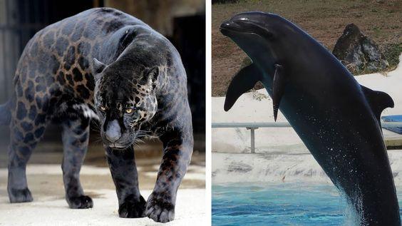 10 Animales Híbridos Que No Creerás Que Existen