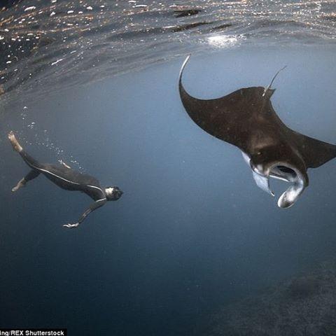"""""""#дайвинг #дайв #погружение #подводой #подводныймир #дайвингидругоймир #вода #интересное #факты #красота #море #океан #дайвер #отдых #позитив #diving #underwater #dive #divingandotherworld #ocean #sea #scubadiving #акваланг #scuba"""" Photo taken by @divingandotherworld on Instagram, pinned via the InstaPin iOS App! http://www.instapinapp.com (12/09/2015)"""