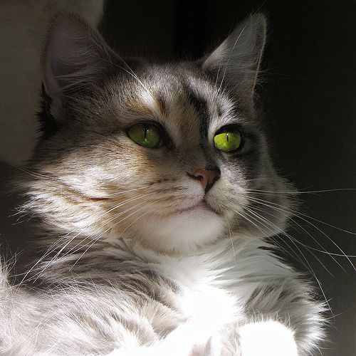 """""""Cats are a mysterious kind of folk. There is more passing in their minds than we are aware of."""" - Sir Walter Scott"""