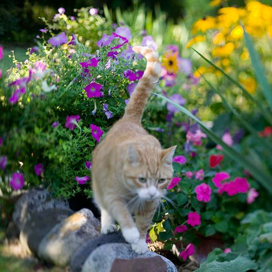 Stopping cats in the garden garden ideas cat stuff and - How to deter rabbits from garden ...