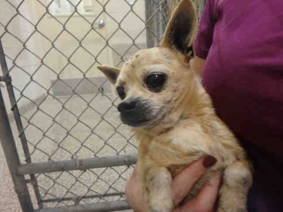 Petharbor Com Animal Shelter Adopt A Pet Dogs Cats Puppies Kittens Humane Society Spca Lost Found Humane Society Animal Shelter Animals