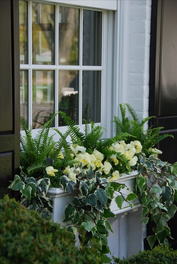 Shade window box...love this ivy