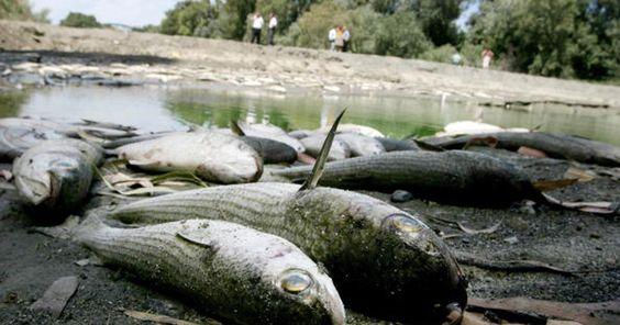 Mejorar urgente la gestión del agua en España FIRMA Y COMPARTE ESTA PETICIÓN AHORA!