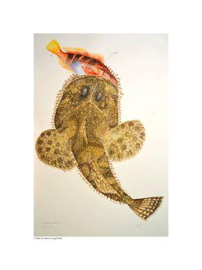 Pesce ragno by Luigi Divari