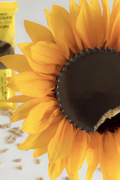 Trader Joe S Now Has An Allergy Friendly Alternative To Reese S Cups Allergy Friendly Sunflower Butter Trader Joes